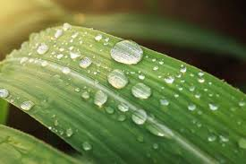 Air embun. 7 Macam Air yang Bisa Digunakan untuk Bersuci atau Thaharah